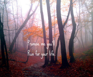 mist, typography, and woods image