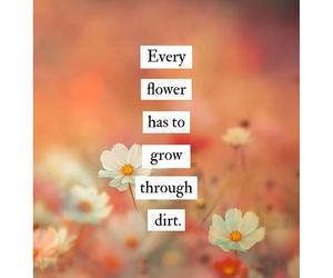 flor, flower, and frase image