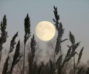 theme, moon, and aesthetic image