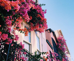 flowers, pink, and house image