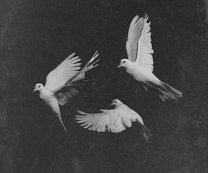 bird, black, and black and white image