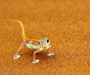 funny images and lizard image