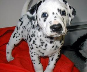 beautiful, dog, and photography image