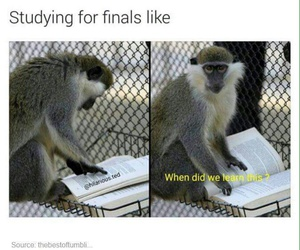 accurate, finals, and funny image