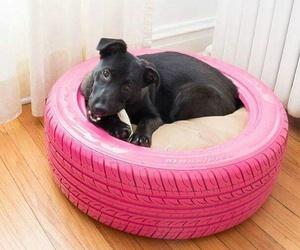 dog, diy, and ideas image