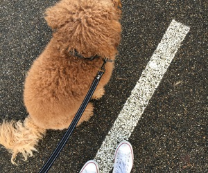 converse, dog, and sneakers image