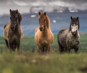 animals, beautiful, and caballos image