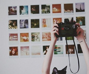 camera, photography, and cat image