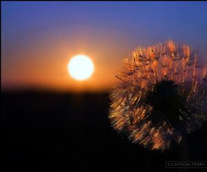 autumn, sunset, and dandelion image