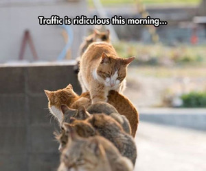 funny, cat, and traffic image