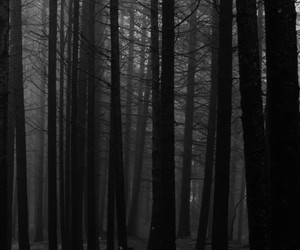 black and white, forest, and tree image
