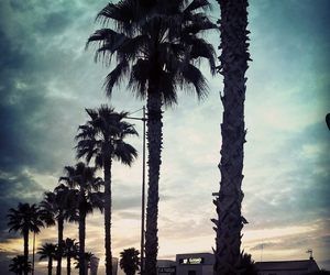 car, palms, and spring image