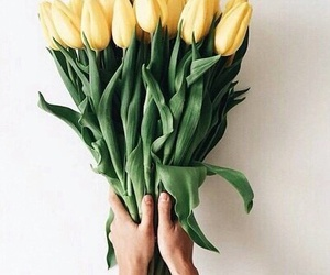 flowers, yellow, and tulips image