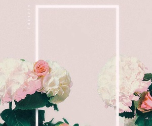 the 1975, flowers, and pink image