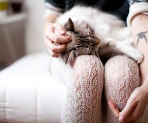 animal, girl, and love image