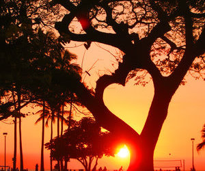 heart, tree, and sunset image