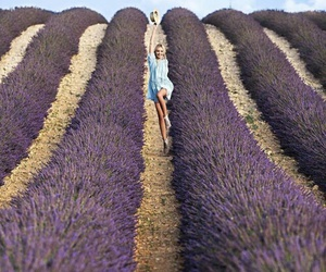 flowers, lavender, and france image