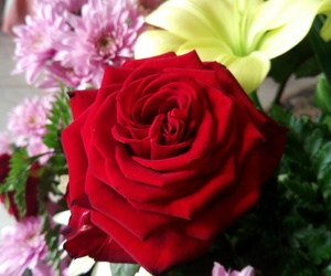 flowers, passion, and red image
