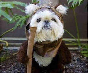 dog, cute, and star wars image