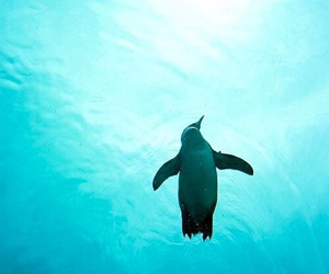penguin, animal, and ocean image