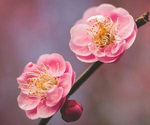 flower spring image