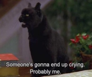 cat, quotes, and cry image