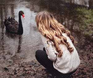 autumn, black swan, and back image