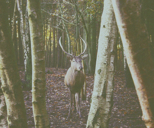 animal, trees, and woods image