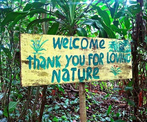 nature, welcome, and tropical image