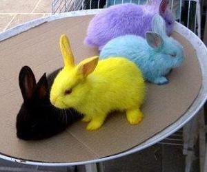 cute, bunny, and colors image