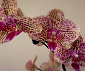 flowers, orchids, and purple image