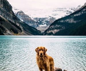 dog, beautiful, and mountains image
