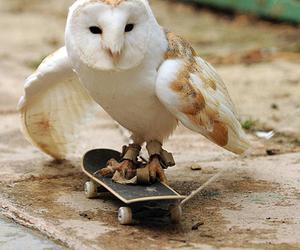owl, skate, and animal image