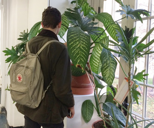 boy, green, and plants image