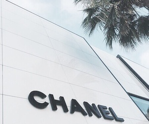 chanel, white, and palm trees image
