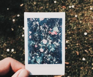 polaroid, flowers, and goals image