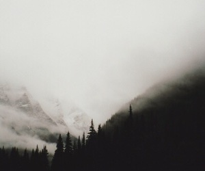 forest, fog, and black and white image