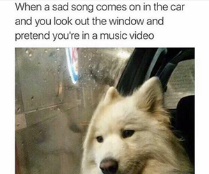 dog, funny, and music image