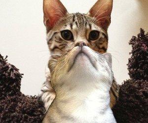 cat, cute, and beard image