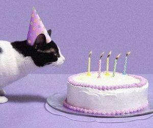 cat, cake, and birthday image
