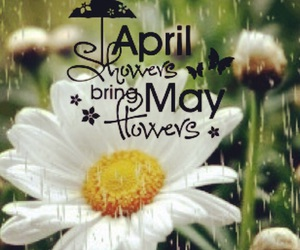 april, daisy, and flower image