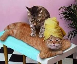 cat, funny, and massage image