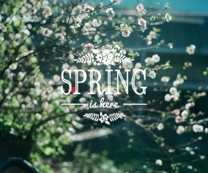 flowers, quotes, and spring image