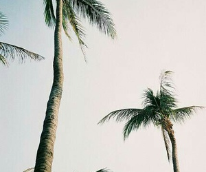 palms, summer, and beach image