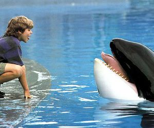 orca and free willy image