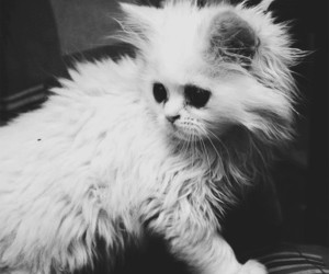 cat, black and white, and kitten image