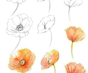 poppies and how to draw image