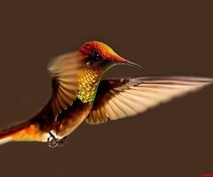 aves, fauna, and hummingbird image