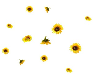 flowers, overlay, and png image