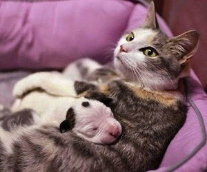 Animais, baby, and cats image
